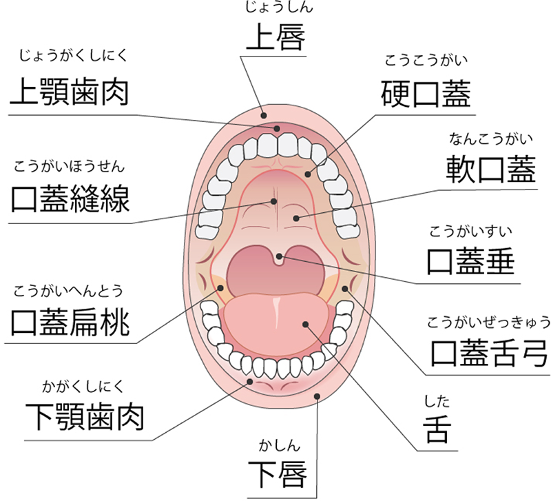 腺 やすい 扁桃 腫れ